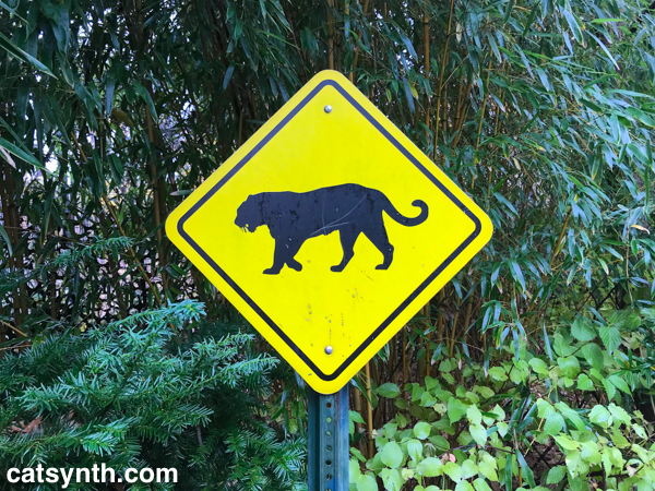 big cat crossing