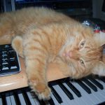 CatSynth Pic: Cat and Keyboard