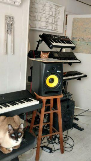 Cats in the Studio