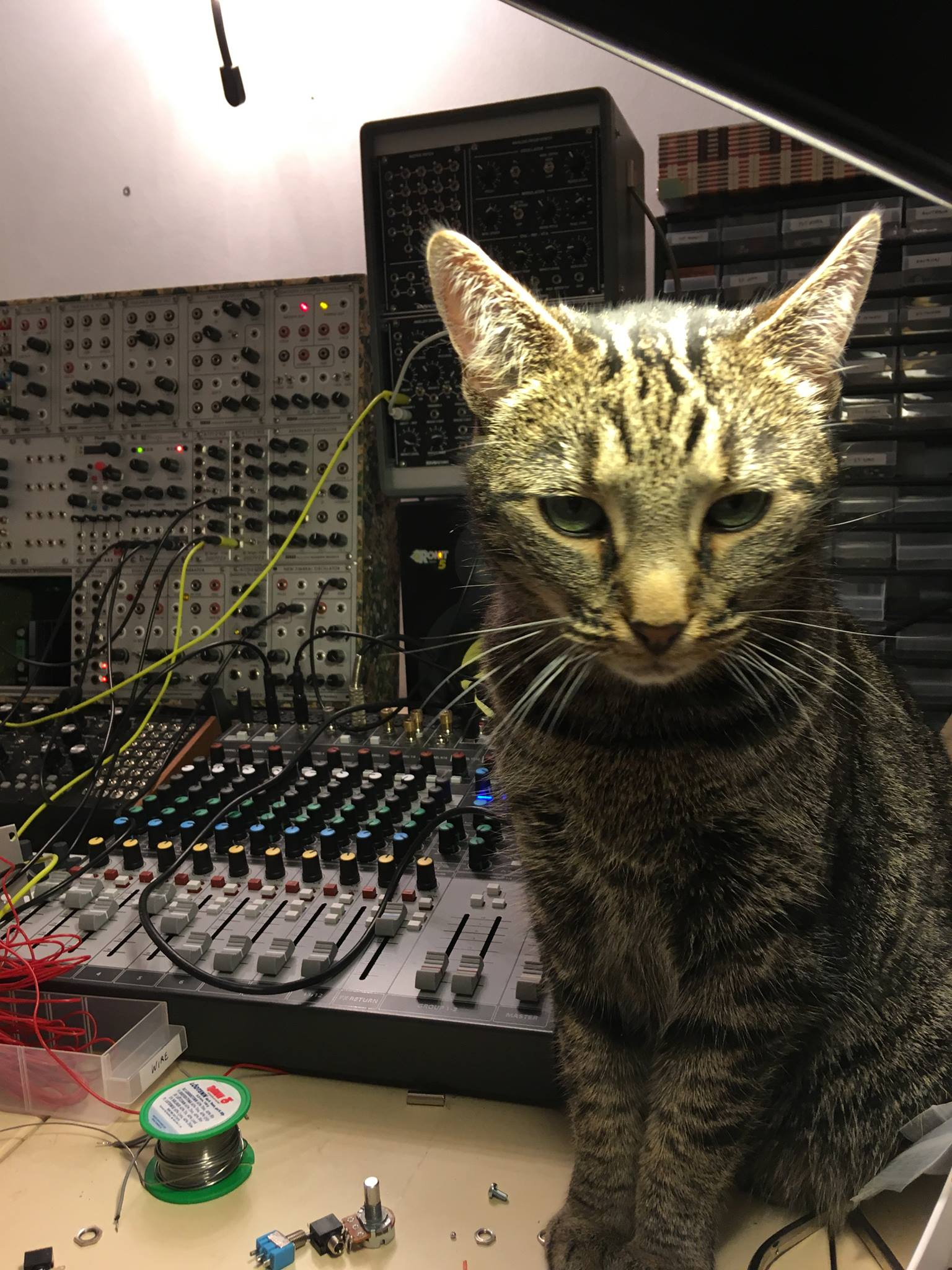 CatSynth Pic: Cat and Mutable Instruments