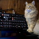 CatSynth Pic: Mr. Maximillion and Novation Peak