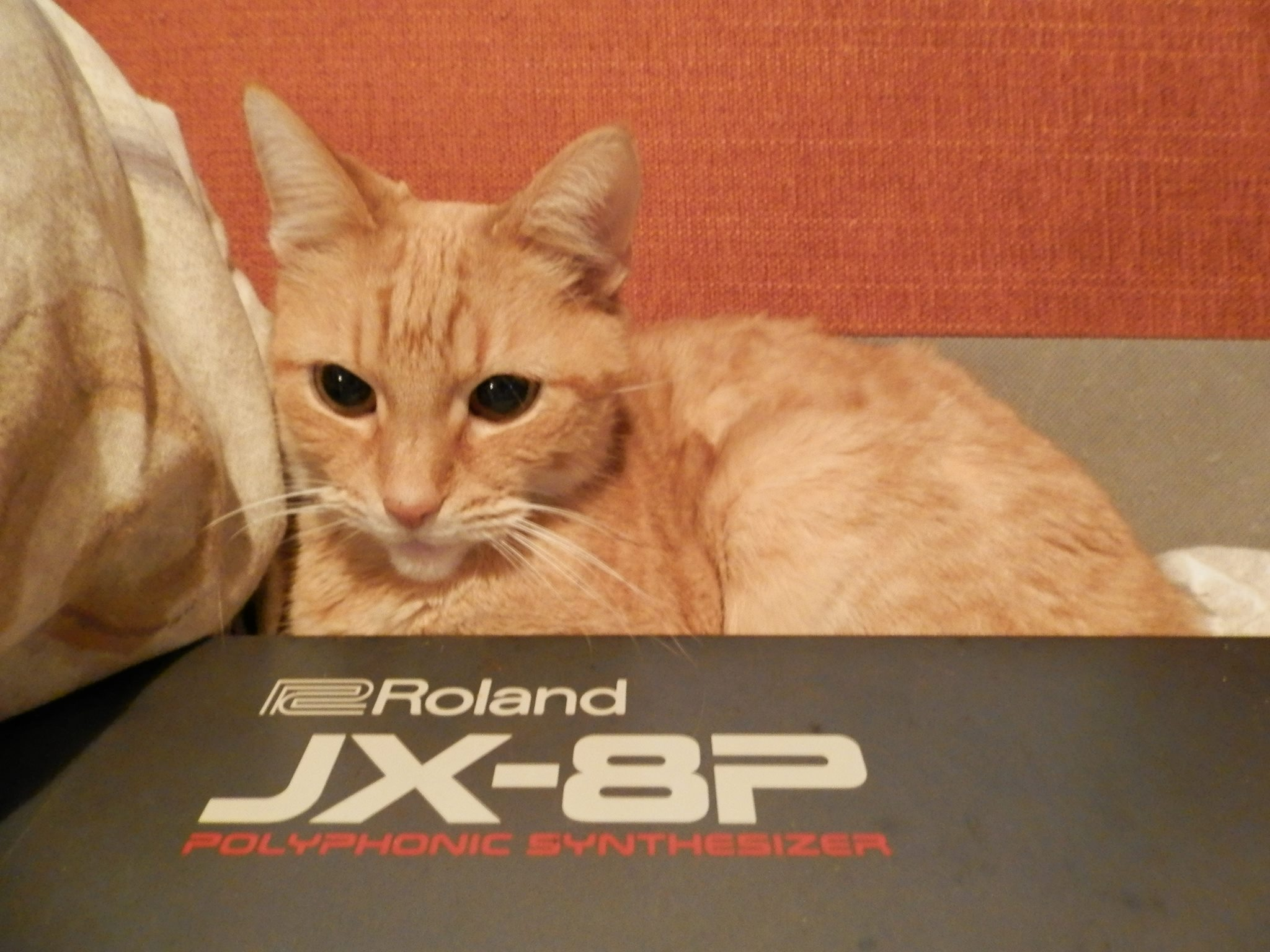 CatSynth Pic: Miep and Roland JX8P