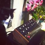 CatSynth Pic: Carmen and Moog DFAM