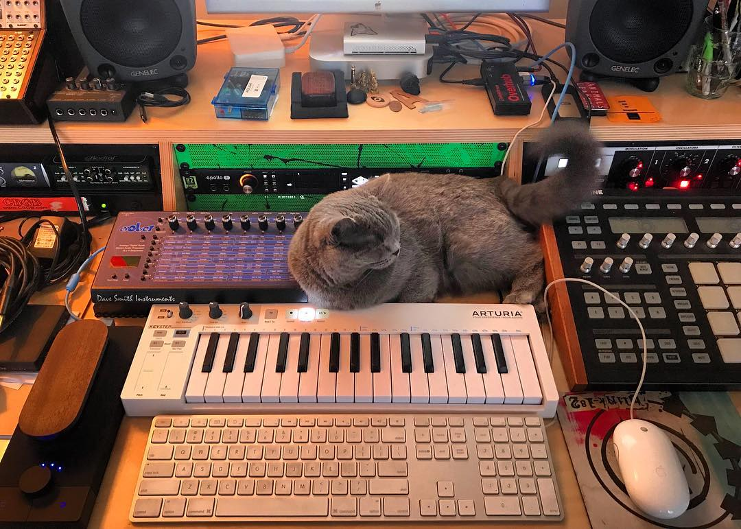CatSynth Pic: Zelda the Gray (Arturia, DSI, Maschine, and More)