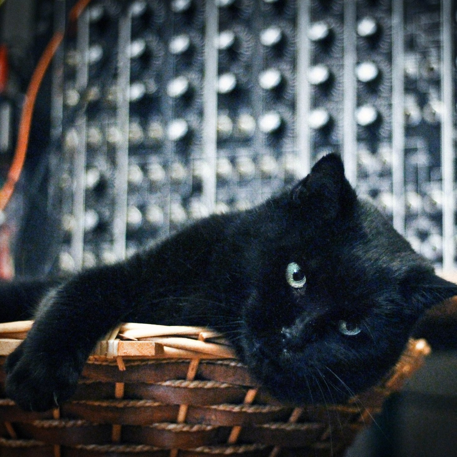 CatSynth Pic:  Black Cat and Modular Synth