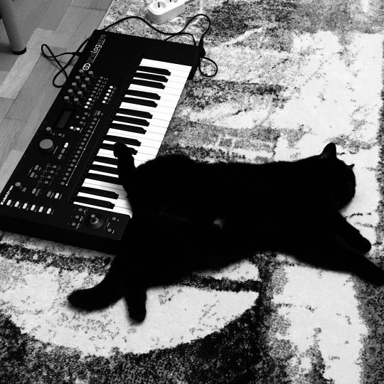 Black Cat and Elektron Analog Keys