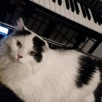 CatSynth Pic: Otto, Moog, and Keyboard