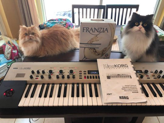 Cats, KingKorg and White Wine
