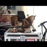 CatSynth Video: Cat rings service bell to make dark ambient music with a modular synthesizer