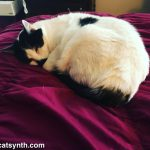 Weekend Cat Blogging with Sam Sam: At Rest