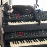 CatSynth Pics: Synergy Cat