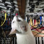 CatSynth Pic: White Cat and Modular, Vertical View