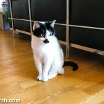 Weekend Cat Blogging with Sam Sam