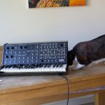 CatSynth Pic:  Cat and Korg MS-20