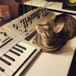Cat and Korg Minilogue