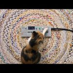 CatSynth Video: Training a cat to play the OP-1