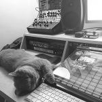CatSynth Pic: Zelda the Gray in the Studio (Moog Semi-Modular Synths)