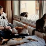 CatSynth Video: Sarper Duman and his Cats