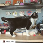CatSynth Pic: Cat, Modular, Field Kit, and Music Easel