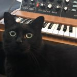 CatSynth Pic: Angelique and Minimoog Model D