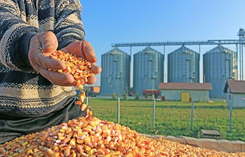 grain in hands - silos in background