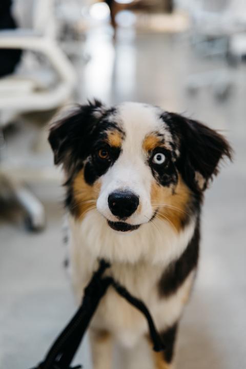 Elizas Pup