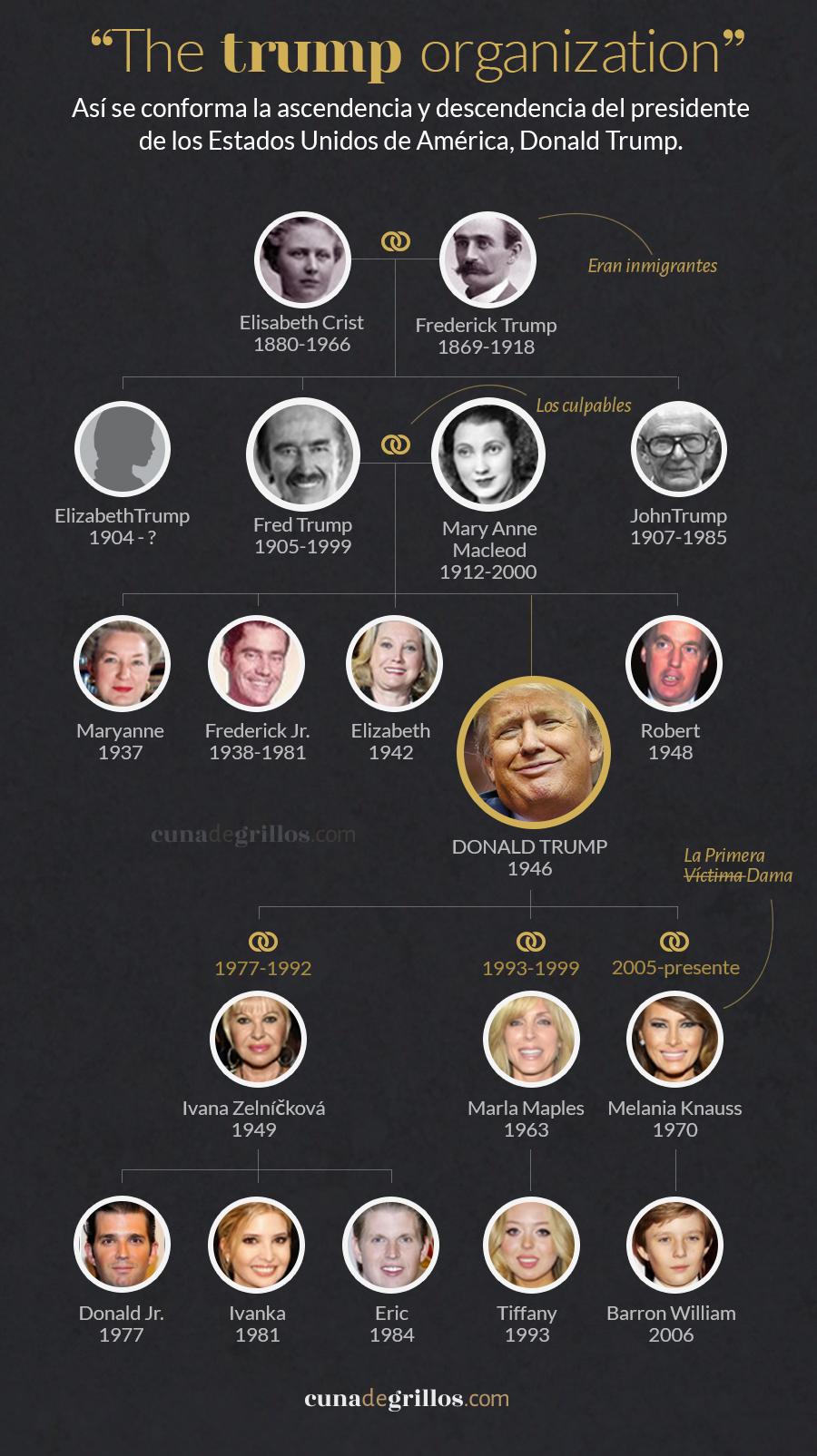 arbol genealogico 3