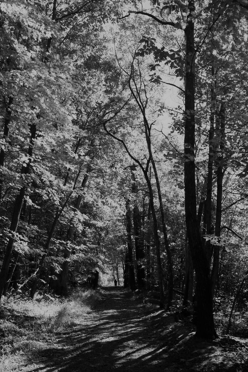 Deepdarkwoods