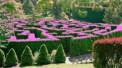 Next years garden