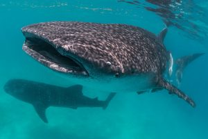 From binoculars to big data:  Citizen scientists use emerging technology in the wild