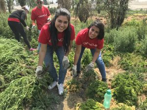Oracle Volunteers Get Their Hands Dirty for a Cleaner Planet