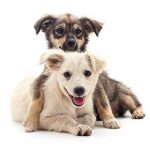 3 Ways to Effectively Potty Train Your Puppy