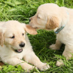 How Socialization Can Improve a Dog's Behavior