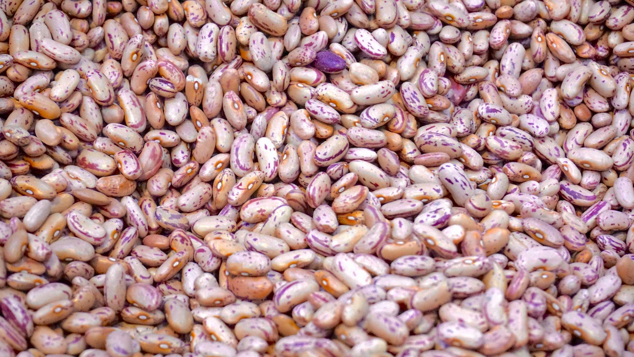 purple beans white beans beans