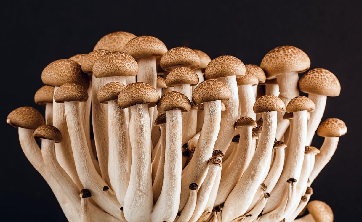 mushroom-fungi-fungus-many-