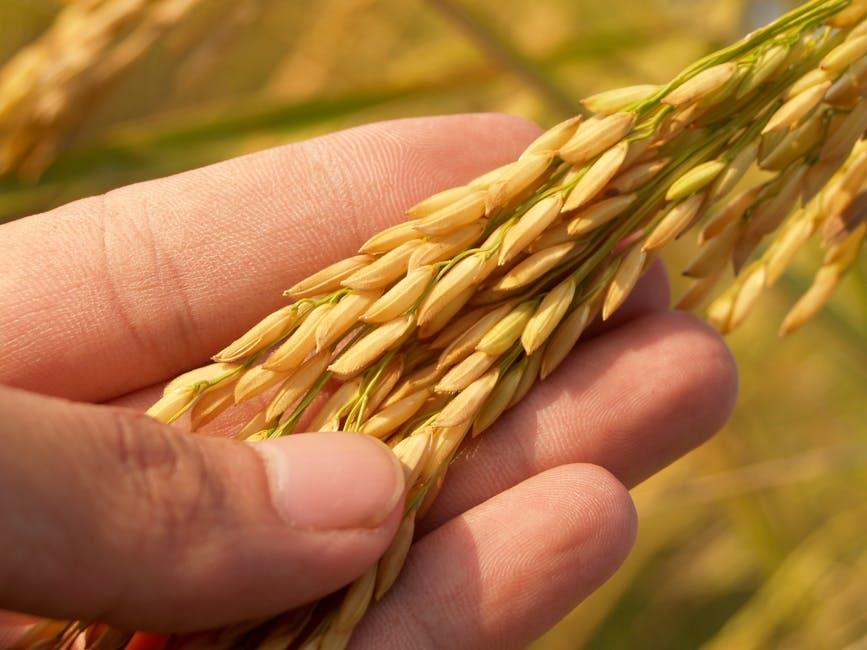 rice grain whole grain starch brown rice