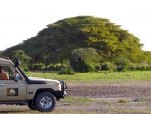 Vehiclewithtree