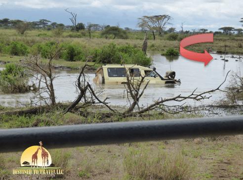 Africa, Grumeti River, jungle, hippo, hippo pool