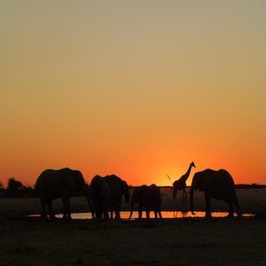 African Safaris - Looking for an exotic getaway?