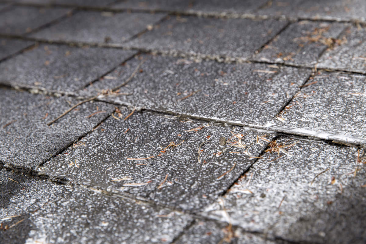 How To Treat And Remove Moss From Your Roof Like A