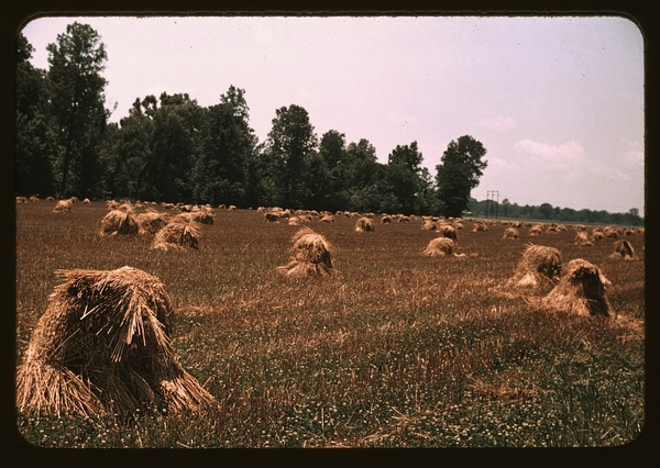 Typical southeastern Georgia farm with newly harvested field of oats