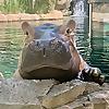 Cincinnati Zoo Blog