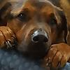 ohmidog! | Celebrating the glory of dog, daily, since 2008