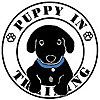 Puppy In Training