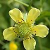 Botany Blog