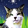 Basil's Blog - Basil the Bionic Cat