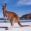 Down Under Endeavours – Australia