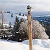 Skishoeing