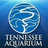 TN Aquarium Blog