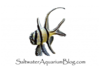 Saltwater Aquarium Blog